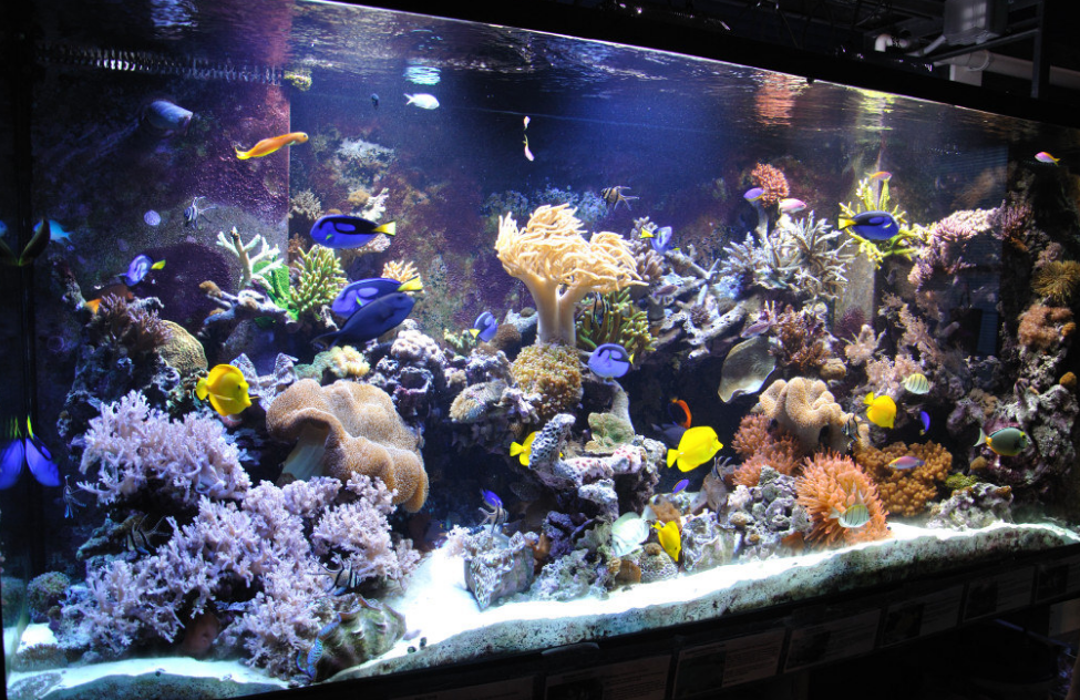 4 Tips Buat Aquarium Air Laut